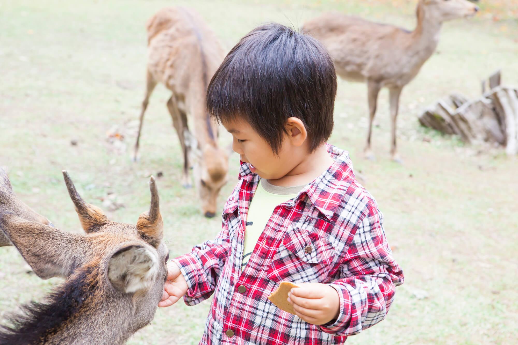 鹿に餌をやる少年